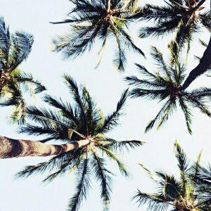 夏の強い紫外線とヤシの木
