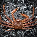 蟹のお取り寄せで最高の贅沢を!蟹の魅力は旨さと美容&健康にも効果あり!!