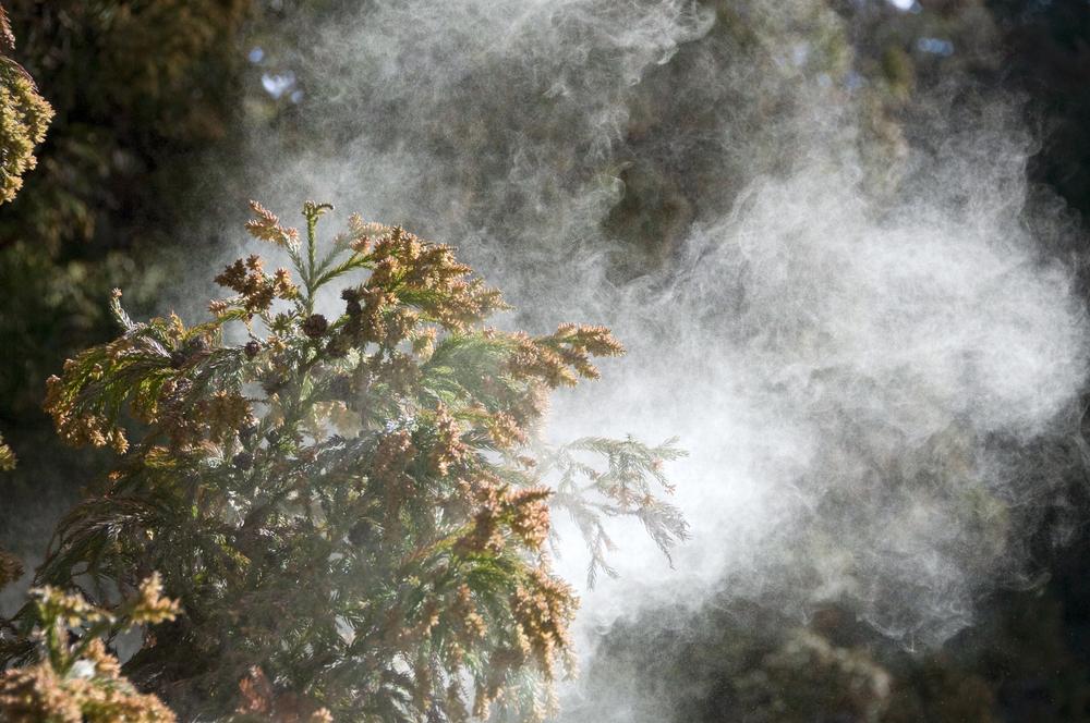 2017年、春の花粉の飛散時期と対策方法!今年の花粉はいつ来る?