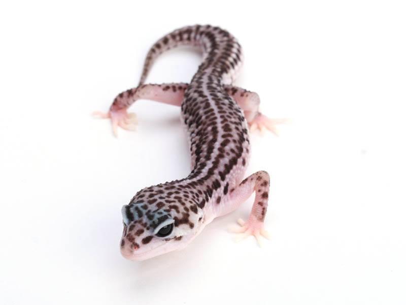 来たる5月20日/21日! 東京レプタイルズワールド開催! 爬虫類博士にインタビュー