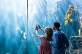 大人の水族館デートならアクアパーク品川!おすすめや魅力&インスタ映えスポットを徹底解剖
