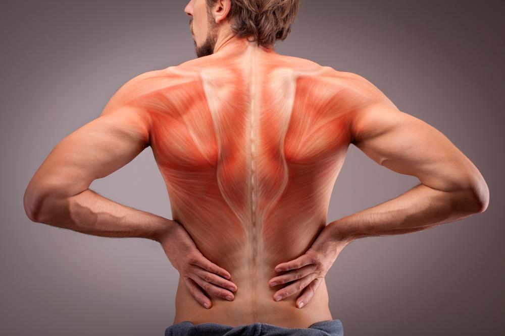 背中の筋肉「背筋」の鍛え方大全集!モテる背中はトレーニング次第で誰でも手に入る!!